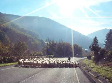 Los nuevos pastores
